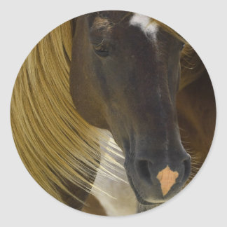 Mustang Horse Photo Stickers