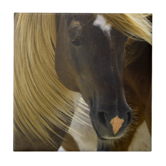 Mustang Horse Photo Trivet Small Square Tile
