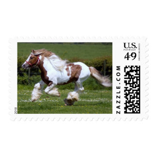 Mustang horse run outdoor somewhere in America Postage