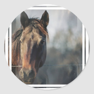 Mustang Horse Stickers