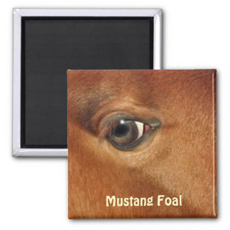 Mustang Horse's Eye Equine Photography Magnet