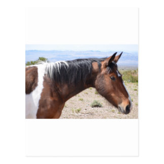 Mustang Postcards