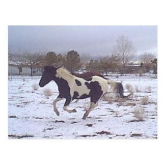 Mustang-Spirit Postcard