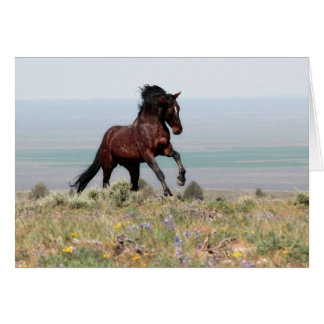 Mustang Stallion, Clancy- Greeting Card