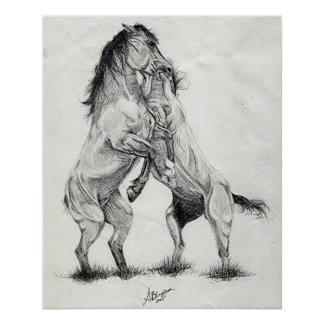 Mustang Stallions Wild Horses Poster Print