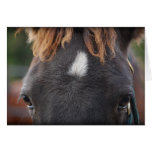 Mustang View Greeting Cards