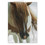 Mustang Wild Horse Greeting Card