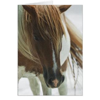 Mustang Wild Horse Greeting Card