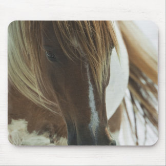 Mustang Wild Horse Mouse Pad