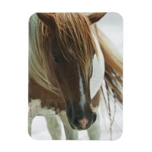 Mustang Wild Horse  Premium Magnet Rectangular Magnet