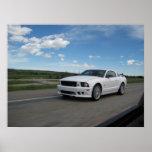 Mustango blanco de Saleen Póster