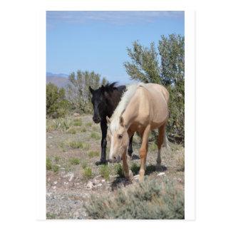 Mustango del Palomino Postales