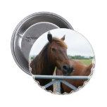 Mustango en el botón redondo de la cerca pins