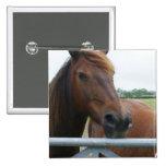 Mustango en el Pin del cuadrado de la cerca