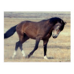 Mustango salvaje de Utah Tarjeta Postal