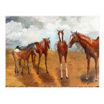 Mustangos banales postales