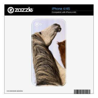 Mustangos españoles iPhone 4 skins