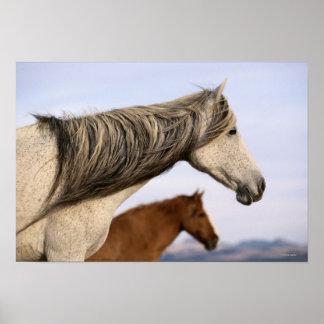 Mustangos españoles posters