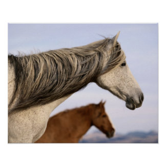 Mustangos españoles impresiones