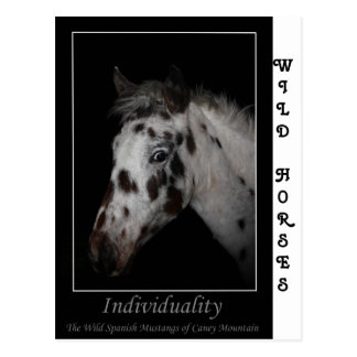 """Mustangos españoles salvajes de la """"individualidad postales"""