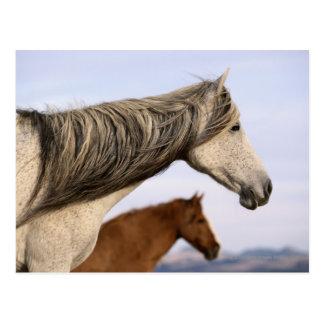 Mustangos españoles postal