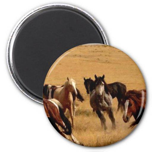Mustangos Iman