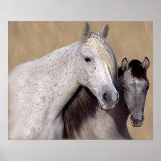 Mustangos Sally e impresión del caballo de Wilson Poster