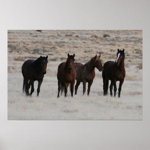 Mustangos salvajes de Utah Póster