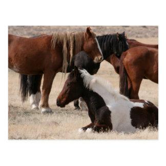 Mustangos salvajes de Utah Postal