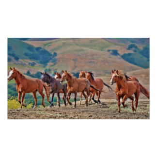 Mustangos salvajes póster