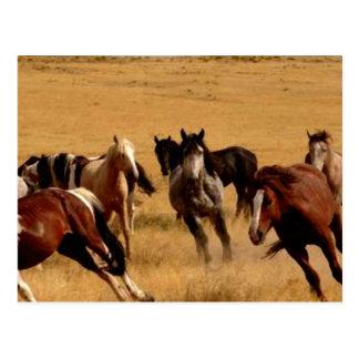 Mustangos Postal