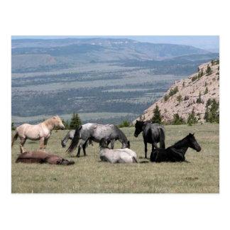 Mustangos Tarjeta Postal