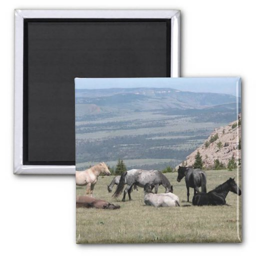 Mustangs 2 Inch Square Magnet