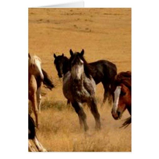 Mustangs Card