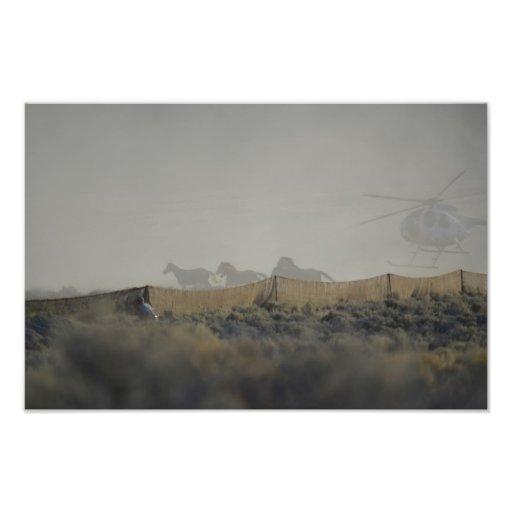Mustangs in the Jute Chute Photo