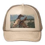 Mustangs Mesh Hats