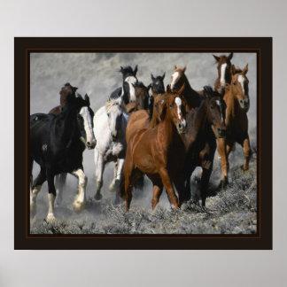 Mustangs Posters