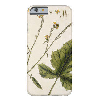Mustard, plate 446 from 'A Curious Herbal', publis Barely There iPhone 6 Case