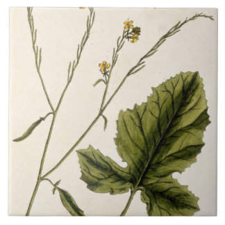 Mustard, plate 446 from 'A Curious Herbal', publis Ceramic Tile