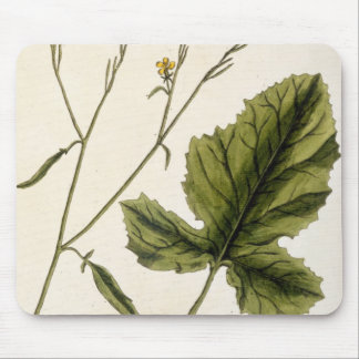 Mustard, plate 446 from 'A Curious Herbal', publis Mouse Pad