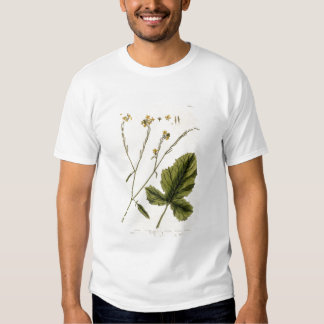 Mustard, plate 446 from 'A Curious Herbal', publis T-shirt