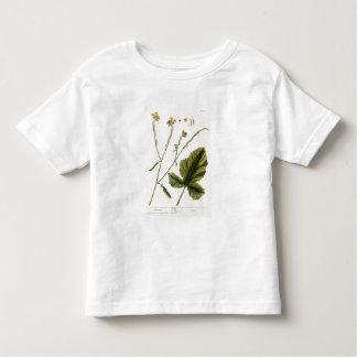 Mustard, plate 446 from 'A Curious Herbal', publis T Shirt