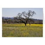 mustard seed tree card