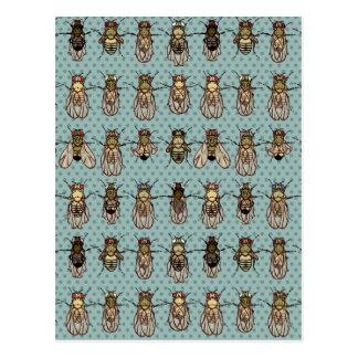 Mutantes de la Drosophila Tarjeta Postal