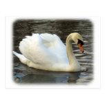 Mute Swan 9R005D-061 Post Card