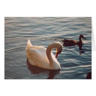 Mute Swan and Mallard Card