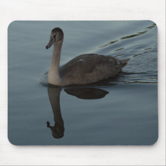 Mute Swan Cygnet Mouse Pad