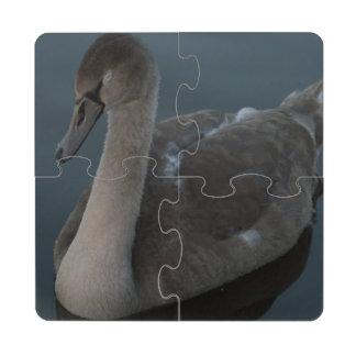 Mute Swan Cygnet Puzzle Coaster