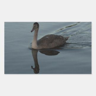 Mute Swan Cygnet Rectangular Sticker