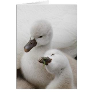 Mute Swan cygnets. Card